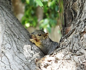 Squirrel a