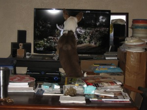 buddy-at-tv